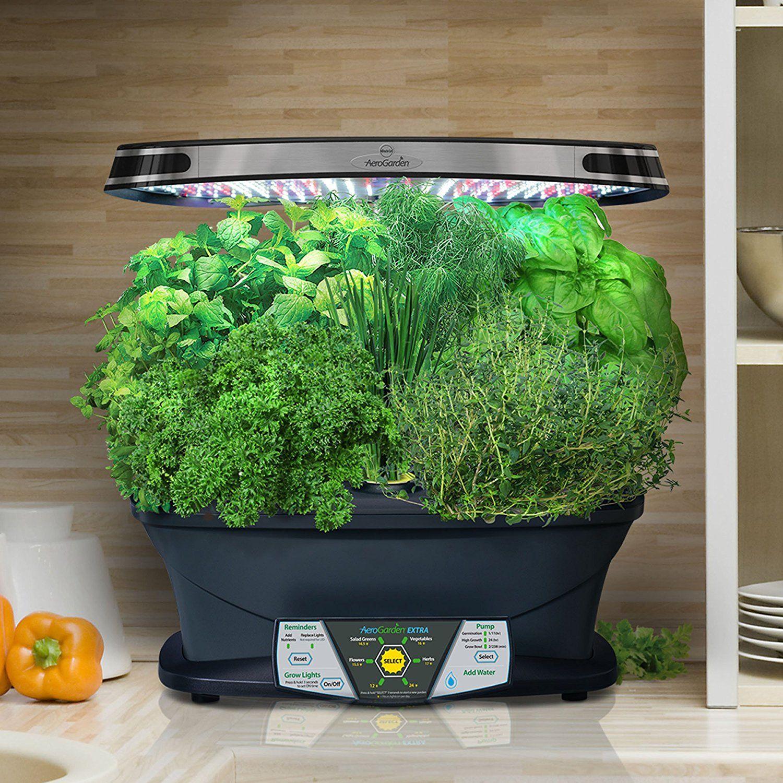 Indoor Herb Garden Gourmet Herb Seed Pod