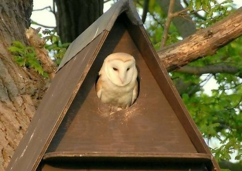 Barn Owl Nest Box For Sale - WoodWorking Projects & Plans ...