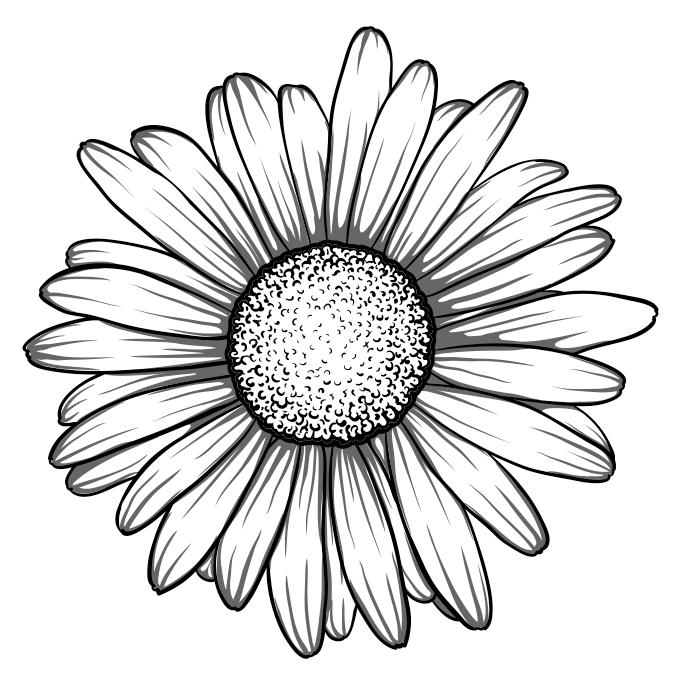 Daisy Ganseblumchen Daisy Drawing Daisy Tattoo Daisy Flower Tattoos