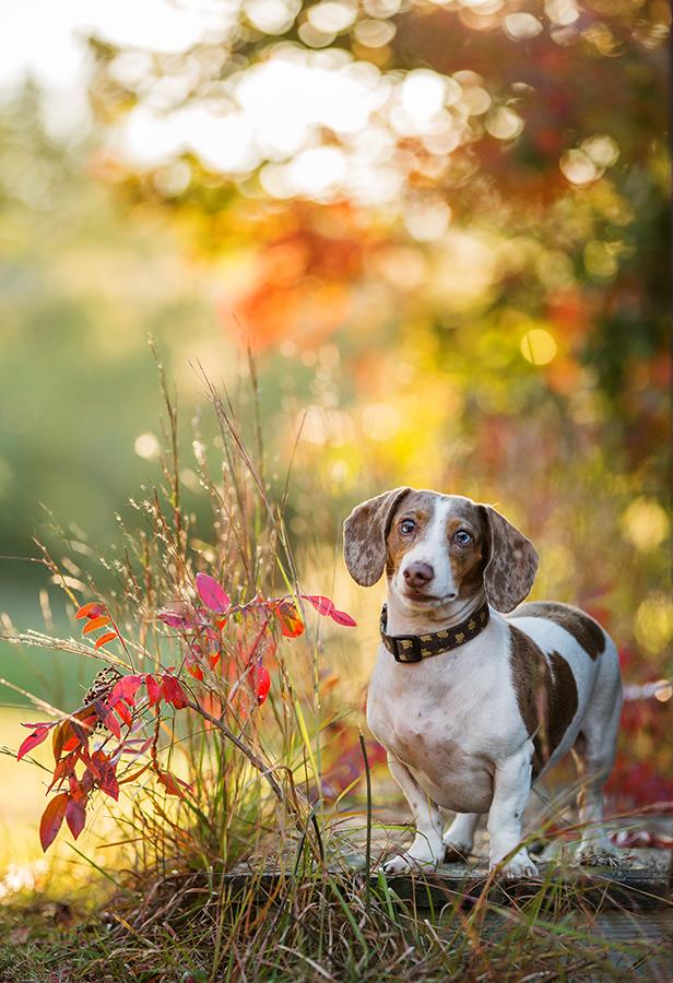 Pet Portraits Dog Portraits Pets Photos Of Dogs Professional Pet Photograph Professional Dog Photography Pet Portraits Photography Dog Portrait Photography