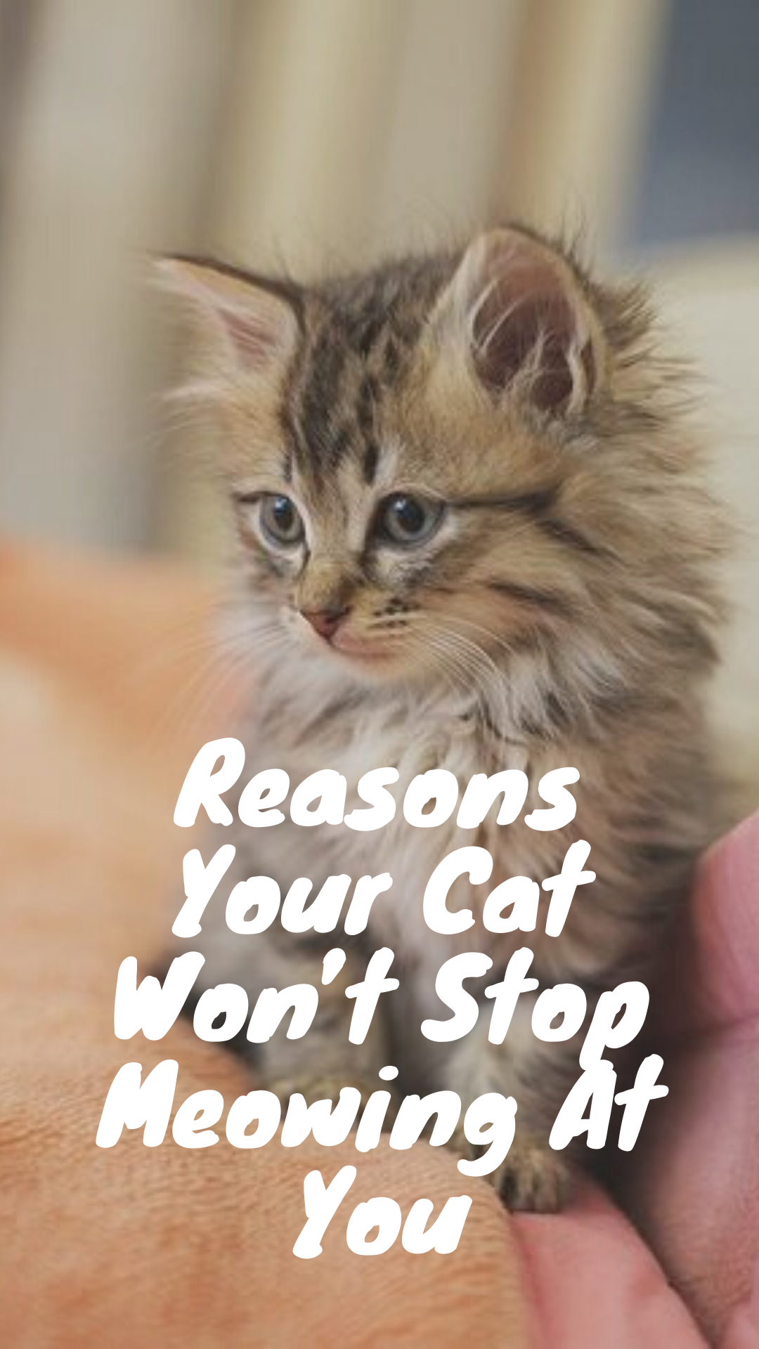 Cats Cat Catlover Catlovers Kitty Meow Kitten Pets Kittens World Catoftheday Cute Love Dogs Animals Pet Gatos Cat Cats Funny Cat Memes Cat Day