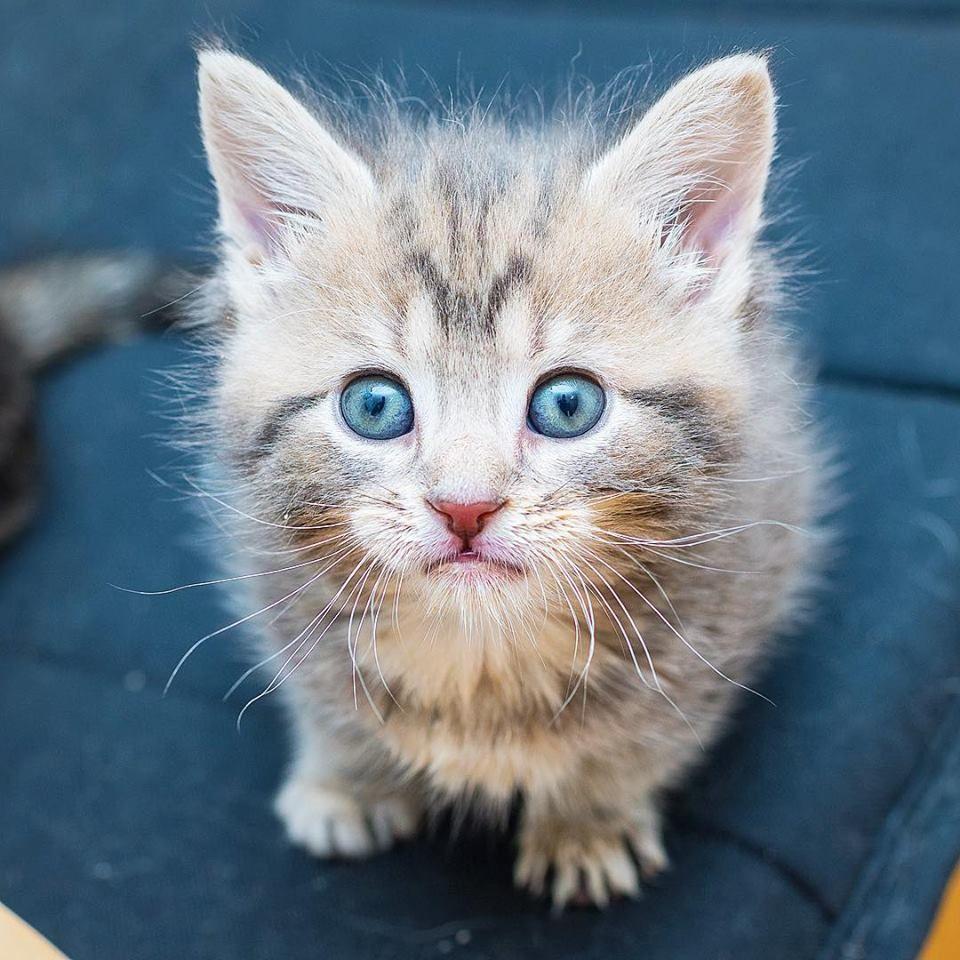 Https Www Facebook Com Iamthecatphotographer Photos A 289752107872394 1073741829 169561259891480 894686470712285 Typ Cute Cats And Kittens Cute Cats Kittens