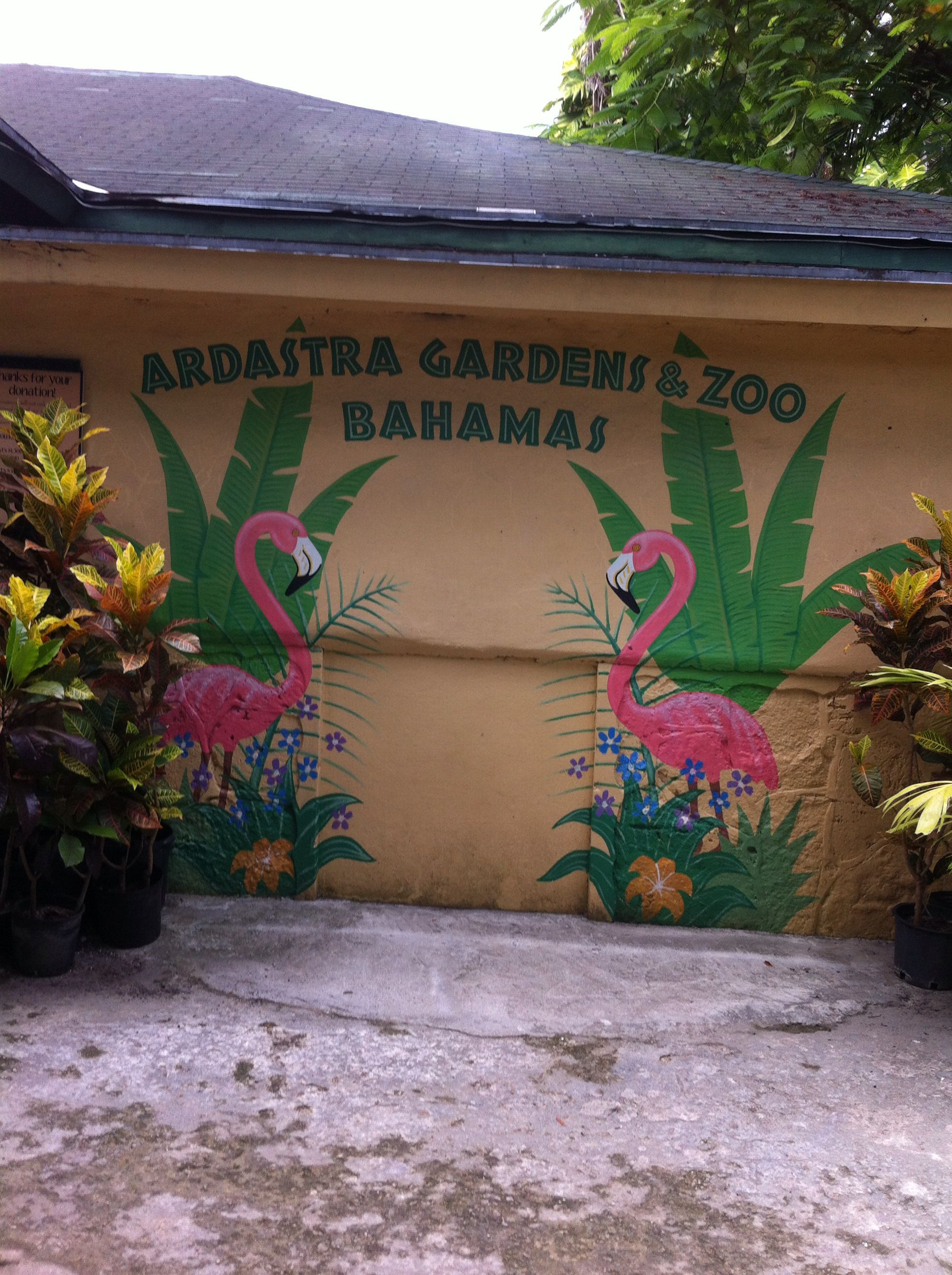 9a3adb6f14c1b9bbf8c2764ef47eef33 - Nassau Bahamas Ardastra Gardens And Zoo