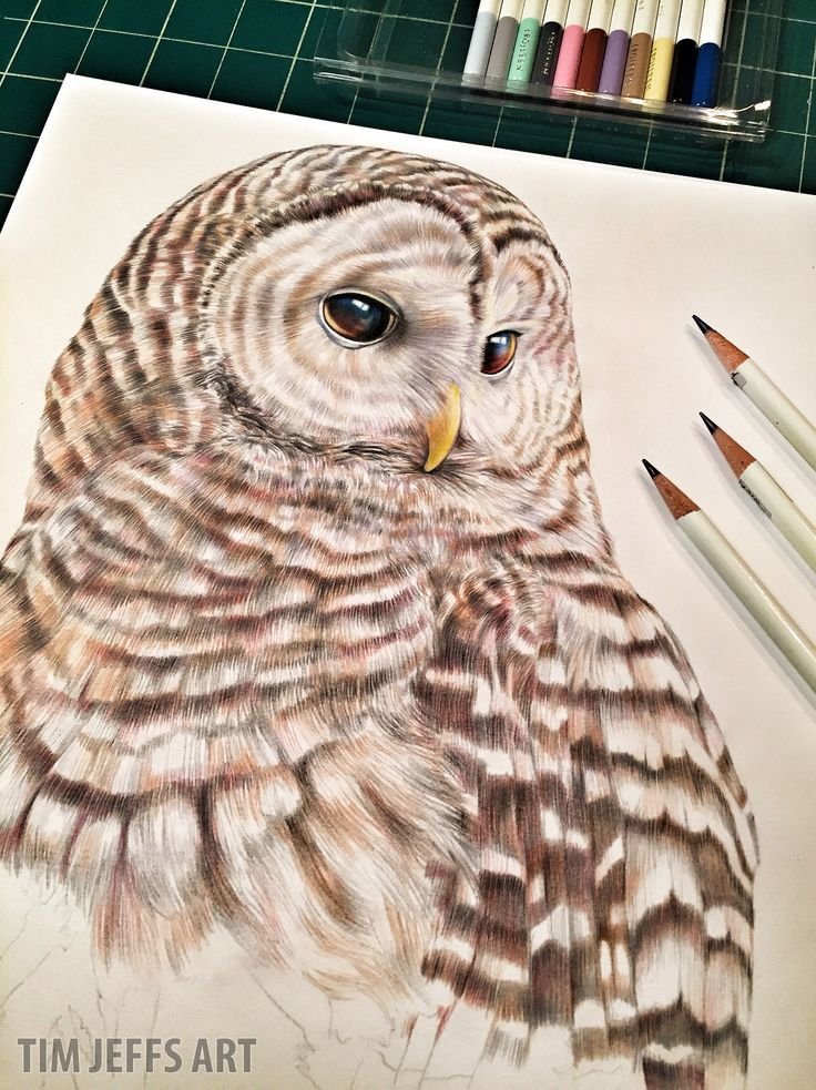 Snowy owl illustration by @timjeffsart using @tombowusa Irojiten Colored Pencils
