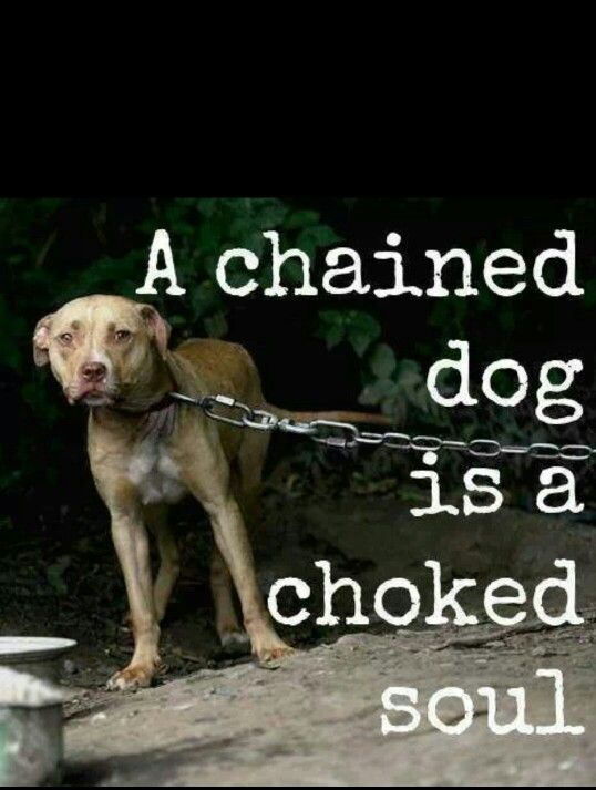 Choked Soul Dogs Pinterest Dogs Animals And Pets