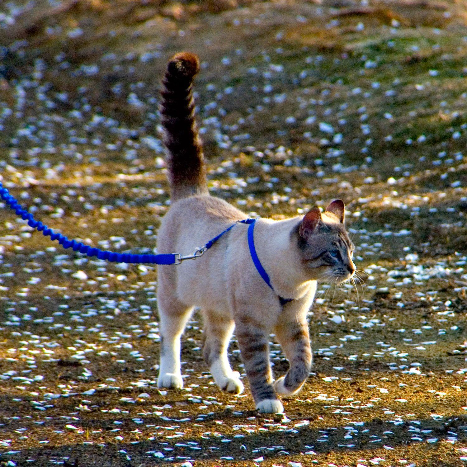 Petsafe Gentle Leader Come With Me Kitty Harness Bungee Leash Petco Cat Leash Gentle Leader Petco