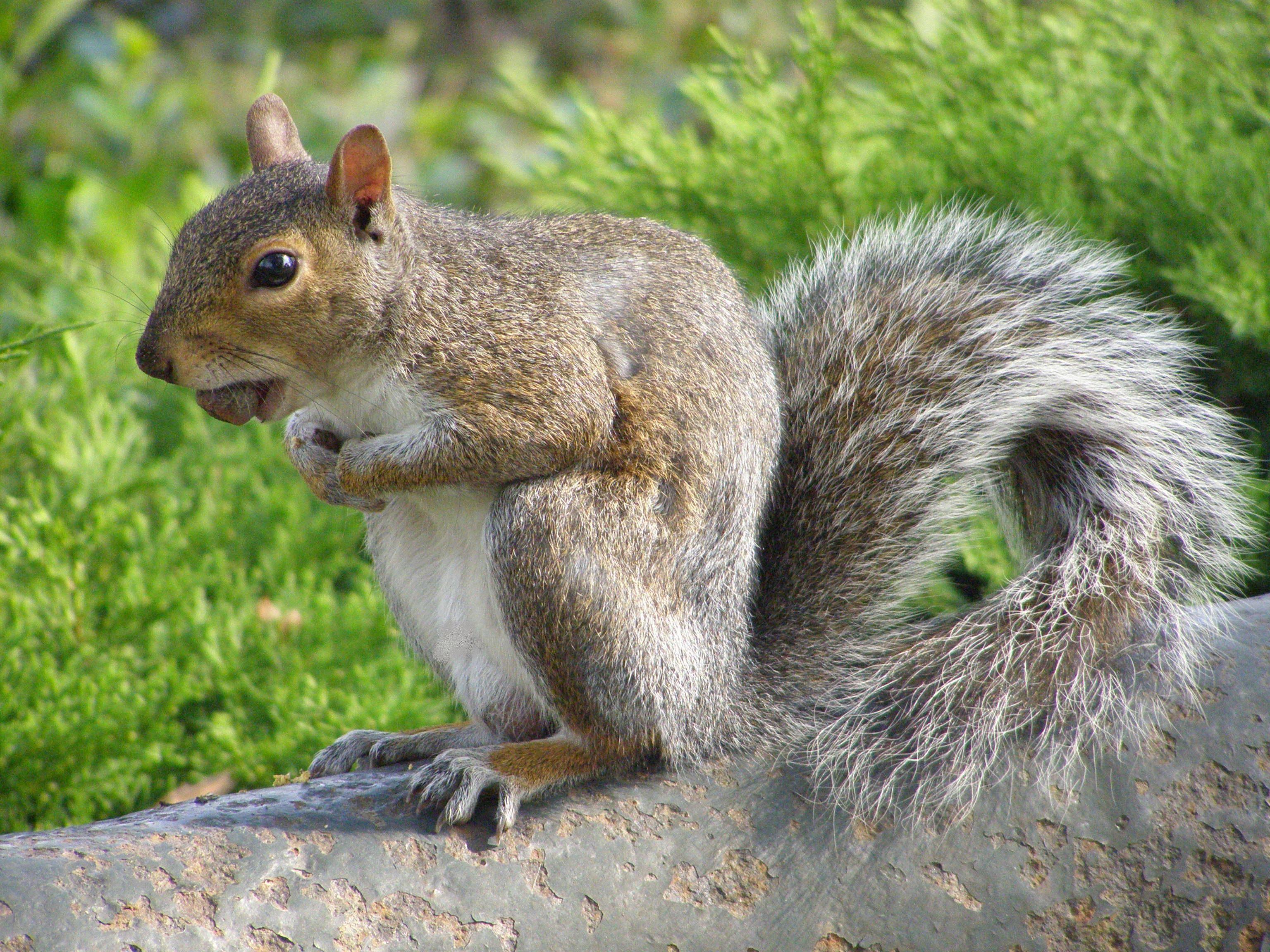 New York Squirrel | Animals, Unique animals, Most beautiful animals