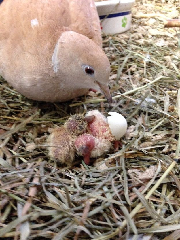 Even dove babies! | 29 Photos Of The Most Adorable Farm On Earth