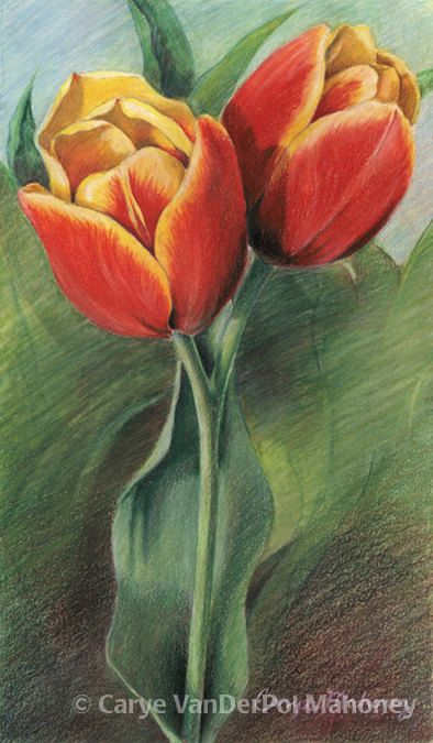 Red And Yellow Tulips Doubleheaded Surrounded By Caryevdpmahoney
