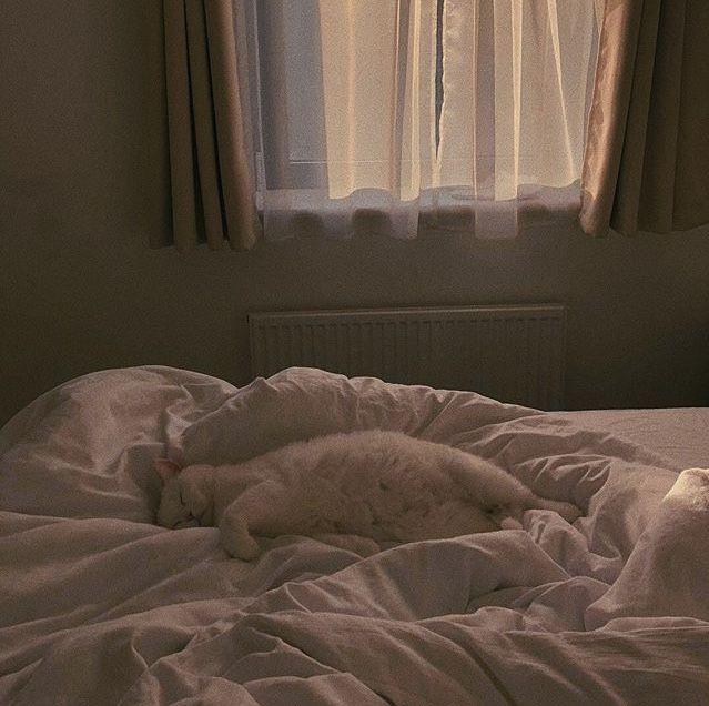 #photography #cats #catsandkittens #kitty #kittens #aesthetic #aestheticphotography #animals #cuteanimalspics  #cutecats