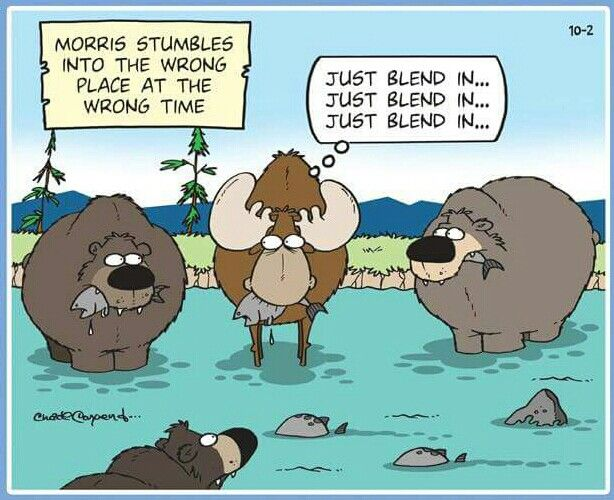 tundra comics fauna bears pinterest comics cartoon and