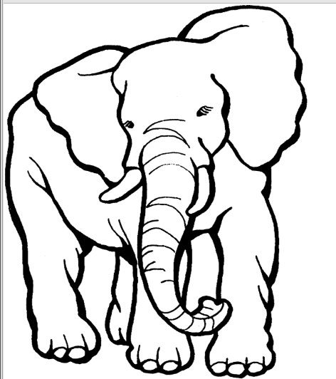 Elephant Zoo Animal Coloring Pages Animal Coloring Pages Elephant Template