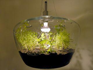 Mini-Serra da interno #glassislife