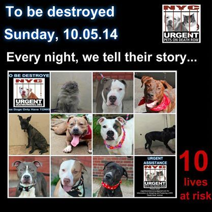 Pin on dogs waiting for a home