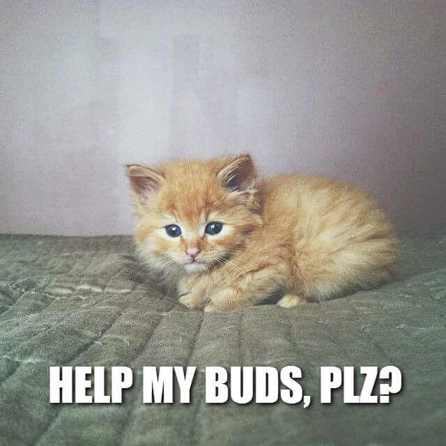 Help by buds, plz?!?