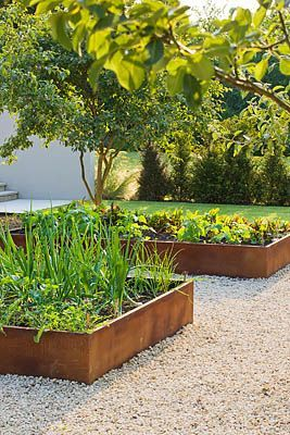 Boxed Garden Beds With Pea Gravel Paths Front Yard Landscaping Vegetable Garden Raised Beds Vegetable Garden Beds