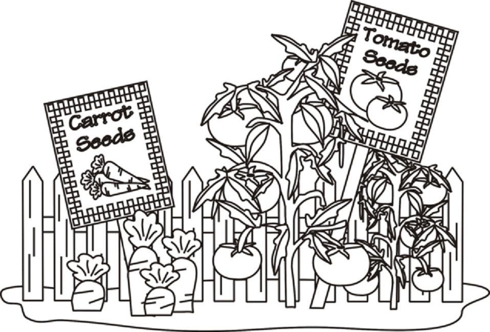 vegetable garden coloring pages | Food | Pinterest ...