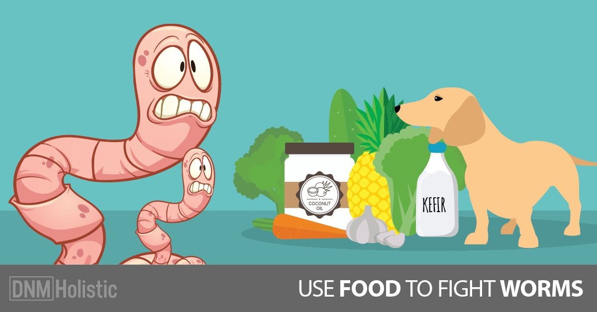 Everyday Foods To Get Rid Of Dog Worms Worms In Dogs Hookworms In Dogs Deworming Dogs