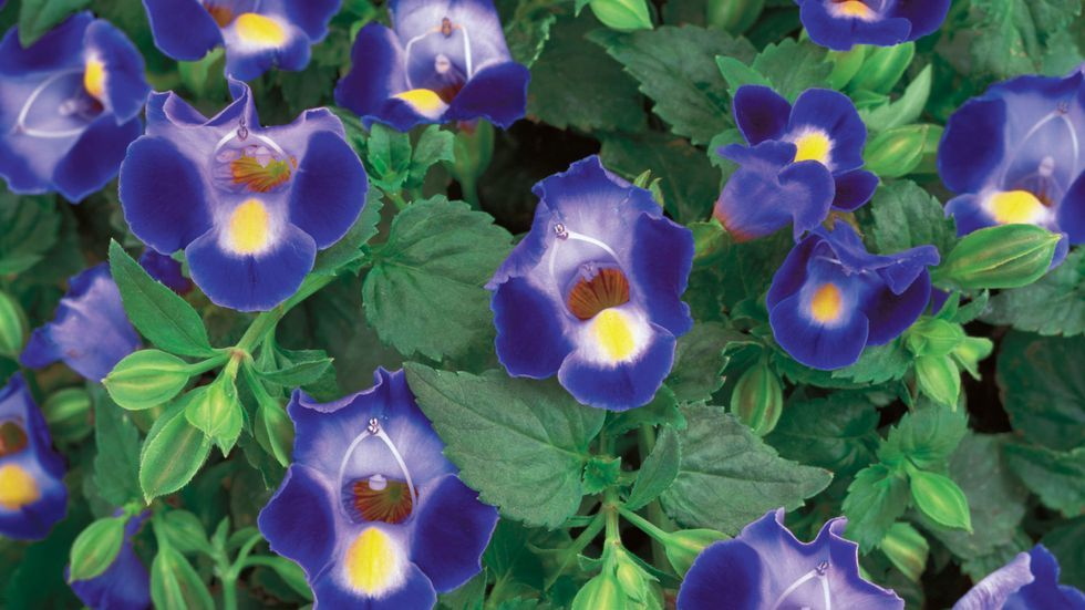 10 Plants That Will Thrive in the Shade #shadeplantsperennial