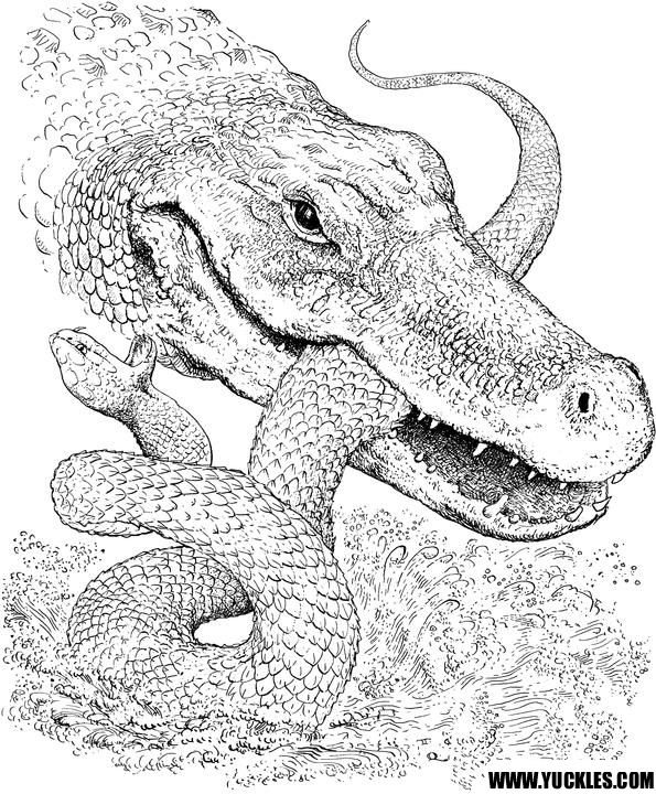 Alligator Coloring Page Snake Coloring Pages Zoo Animal