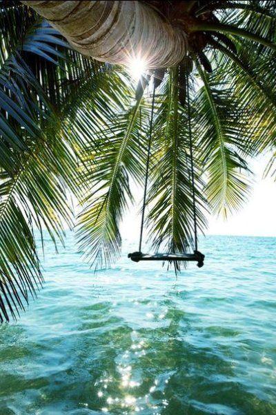 schaukeln unter palmen