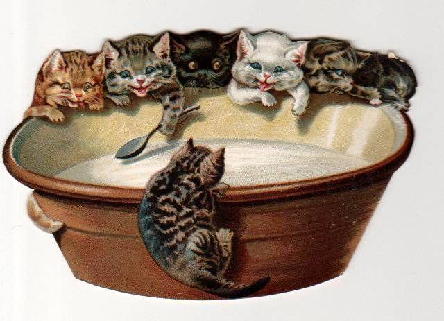 Victorian Cats Having Milk Cats Illustration Vintage Cat Cat Art