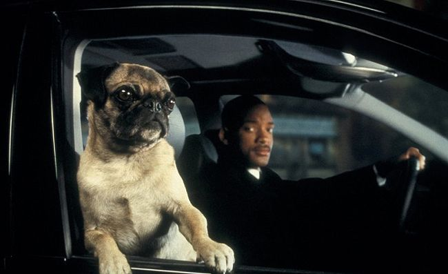 17 Must Watch Movies Tv Shows For All Pug Lovers Pugs