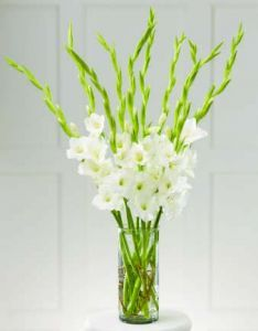 Maybe Just Gladiolas In A Vase For The Altar Arrnagements