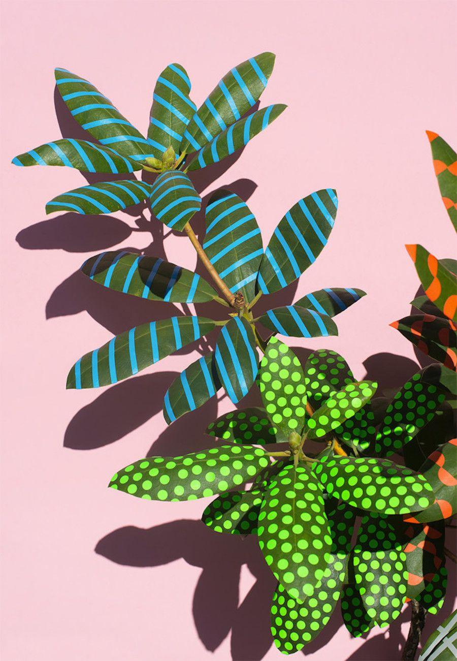 wonderplant-1