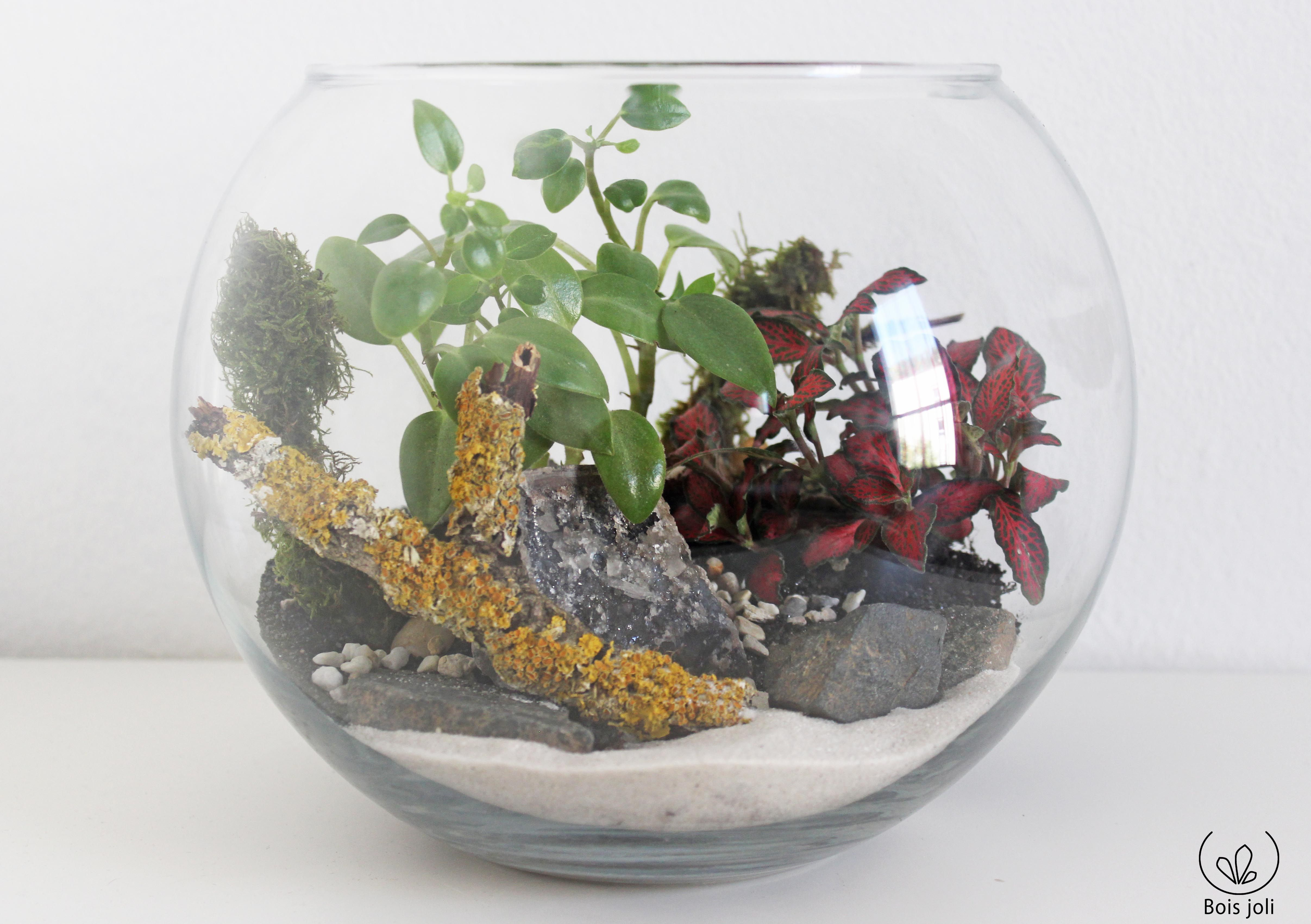 Tropical Fishbowl  Peperomia, Fittonia, Lichen, Mousse