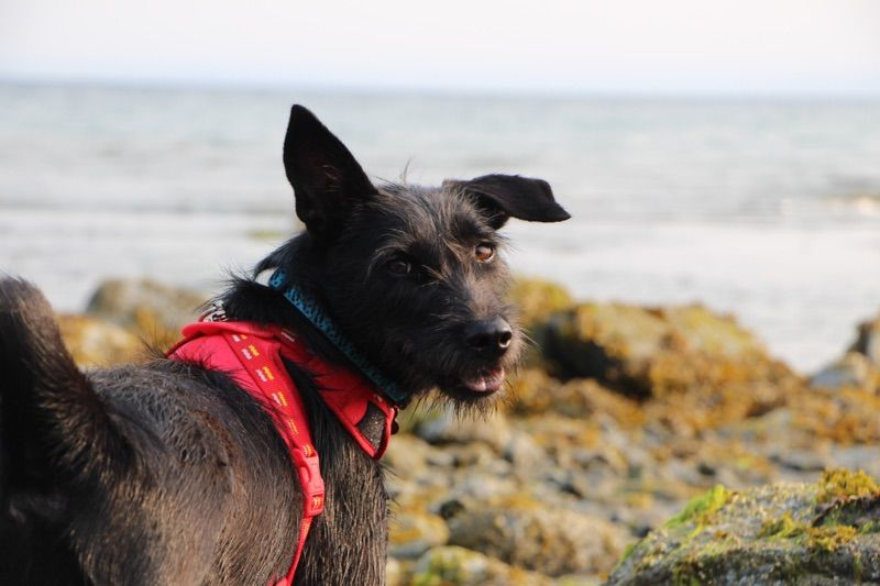 Doglove Dogsmiles Floppyears Van Vanisle Vancouver Bc