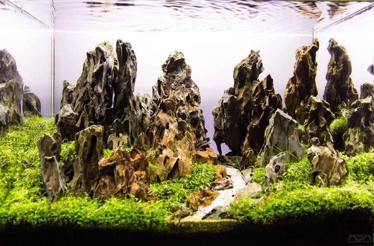 Ohko Dragon Stone Rock Ada Aquarium Tropical Fish Plant Shrimp Driftwood Ebay Fish Plants Aquarium Driftwood Aquarium Fish