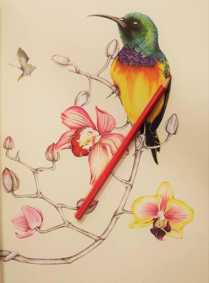 Amazon Com Birdtopia Coloring Book 9781780677552 Daisy Fletcher Books Gorgeous Artwork By Cindy Butl Coloring Books Bird Drawings Color Pencil Sketch