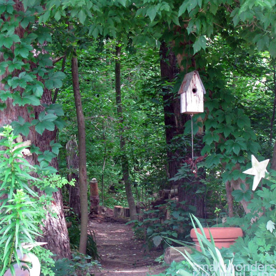 Maintaining Your Woodland Garden   Link → → Http://lesslawn.com/