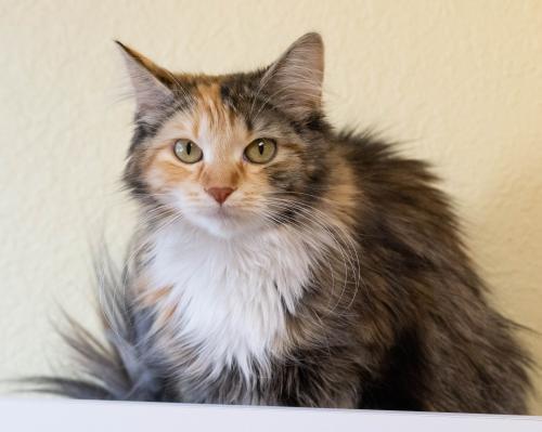 Adopt Daenerys on Pet adoption, Cats, Adoption