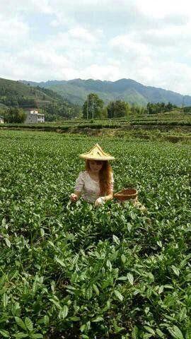 有机荟@鑫苑礼品微店,本品优先支持微信支付 安溪铁观音农户自种茶