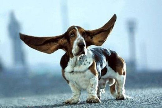 The Hush Puppy Commercial Dog Dogs Pinterest Dogs Basset