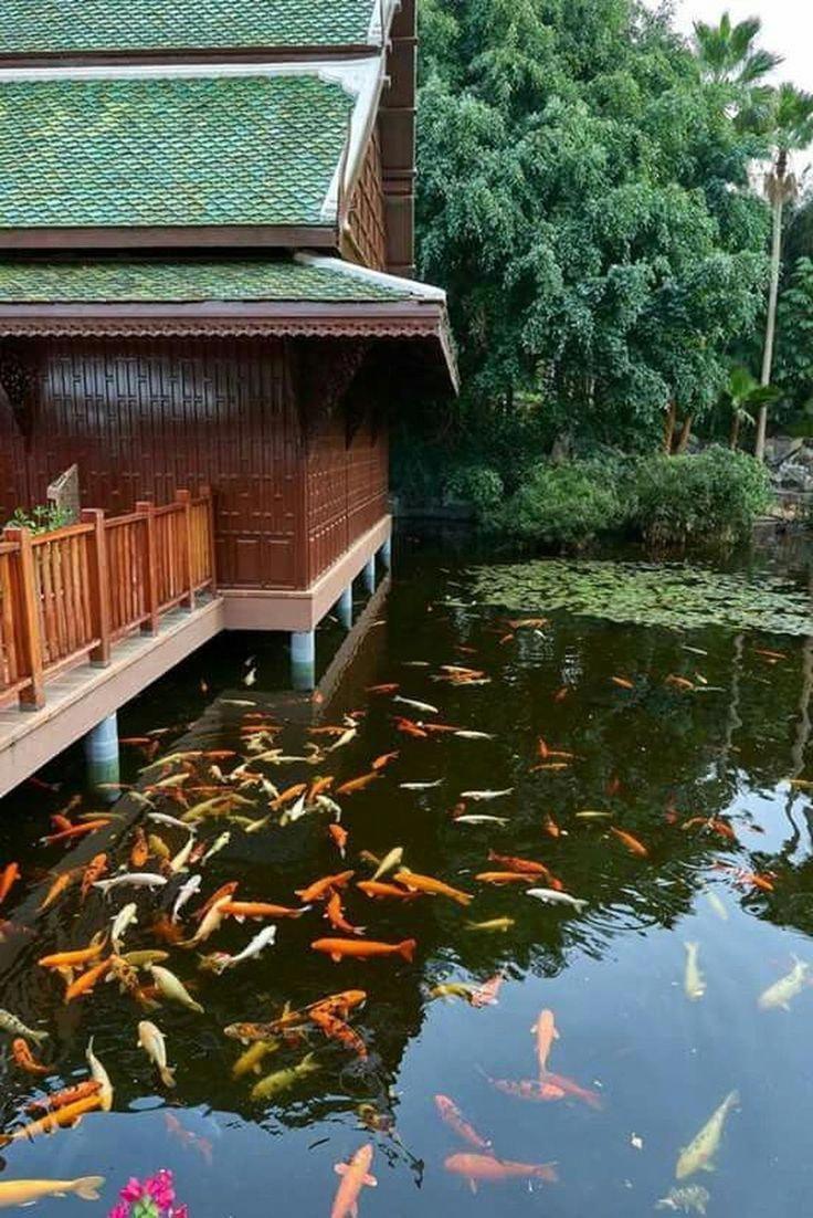 Disciplined broadened aquaponic design Related Site