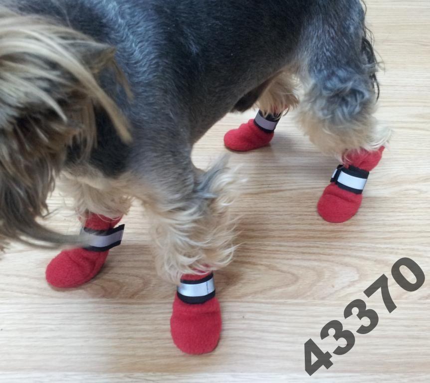 Buty Skarpetki Dla Psa Polarowe Odblaski Promocja 3711234099 Animals