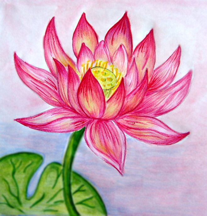Beautiful Flower Line Drawing : Beautiful flower drawings and realistic color pencil