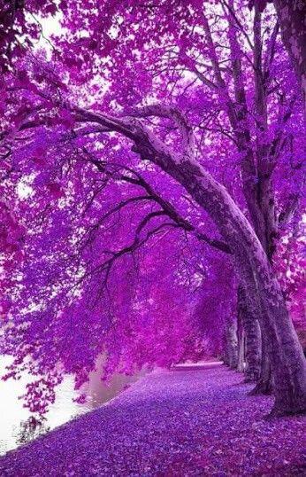 Pin By Laila Abdul On Purple 2 Beautiful Landscapes Beautiful Nature Nature Photography