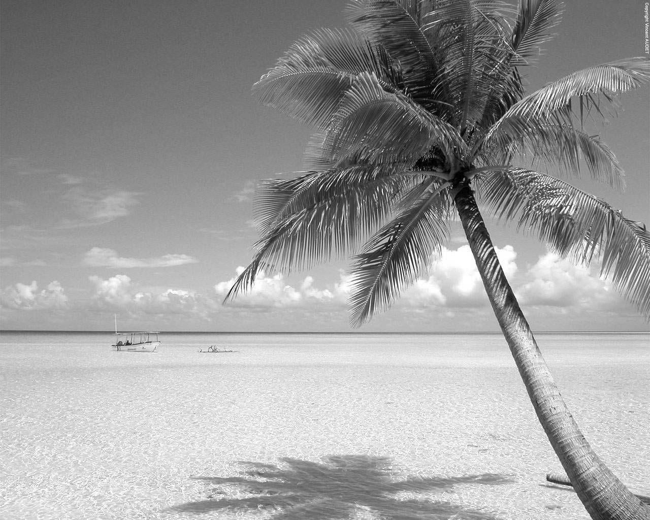 Black White Beach Picture Beaches World Landscape Wallpaper Hd 2814