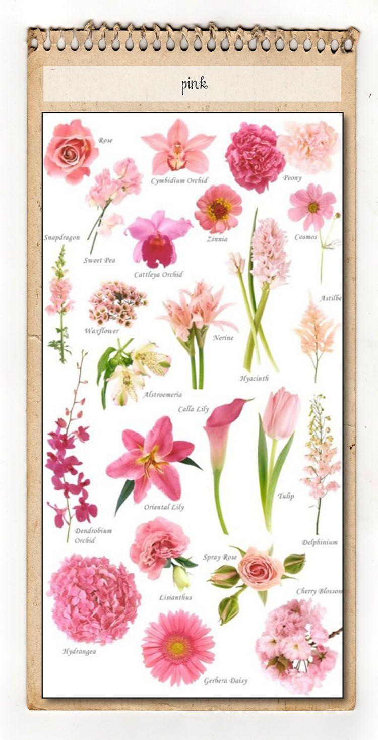 Pink Flower Chart Helpful Tools Pinterest Flower Chart Flower