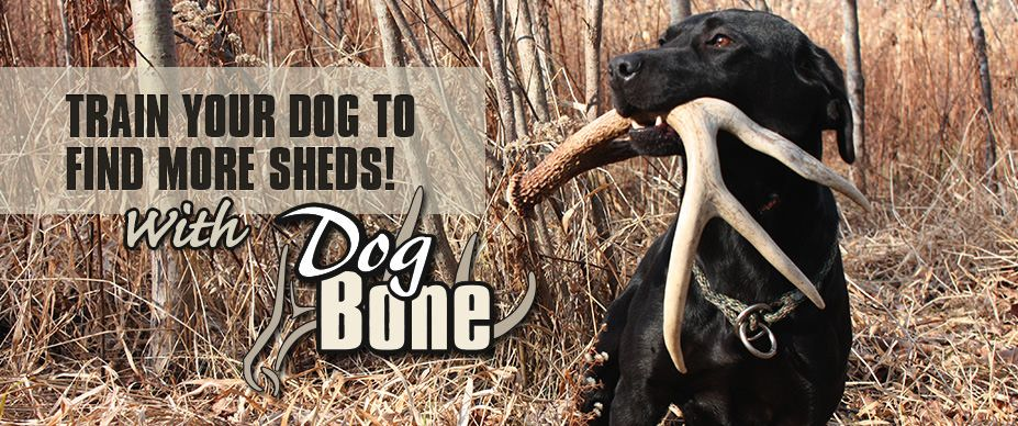 Welcome To Done Bone Hunter Start Your Dog To Hunt Sheds Now