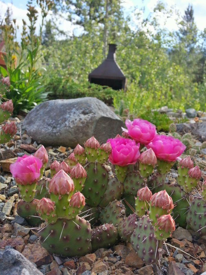 exotische pflanzen fur den garten winterhart, sukkulenten für draußen – winterhart und exotisch | gartengestaltung, Design ideen