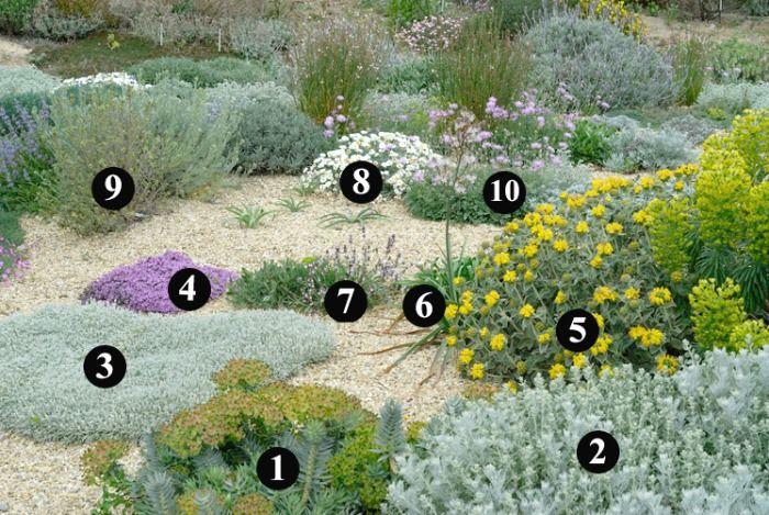 plantas que soportan heladas y son resistentes a la sequa para crear un jardn sostenible y