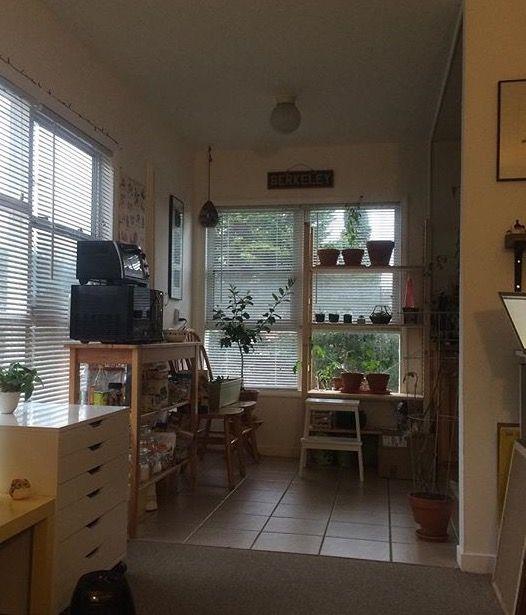 Window shelves
