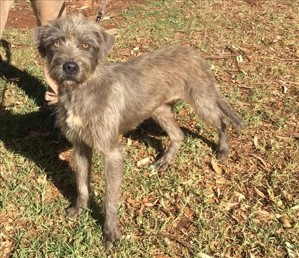 Hi There I M Loopsie I M A Sweet Natured Dog Who Loves Pats I Will Need Daily Exercise And I Love To Play Pop Into Toowoomba To Meet With Images Dogs Animals