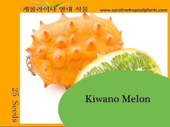 Kiwano Melon Horned Melon Seeds 25 Seed Count Seeds 400 x 300