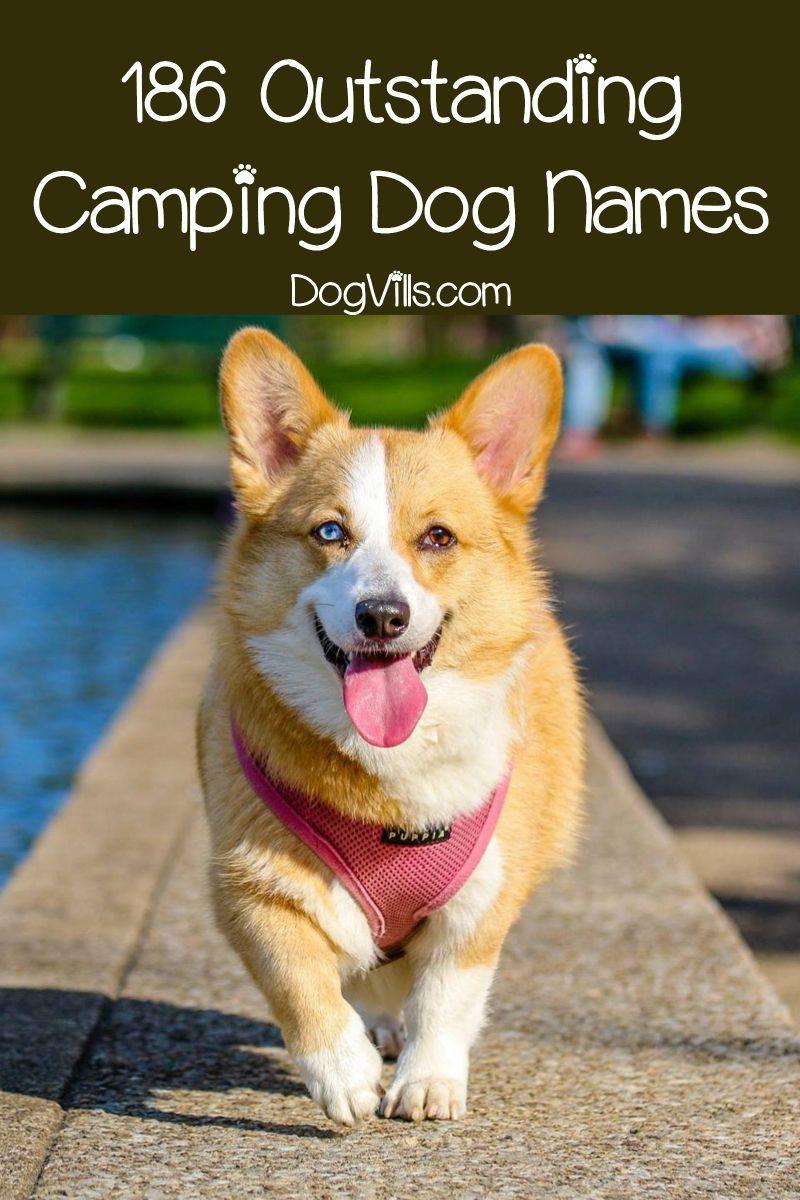 186 Camping Dog Names - DogVills | Dog names, Trail dog, Dog camping